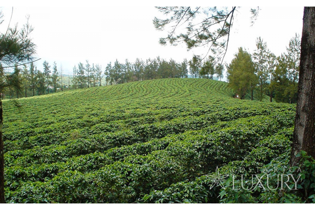 Aurora Homes For Sale >> 558 Hectares of Coffee Farms for Sale in Heredia